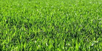 Choosing Florida Friendly Landscaping in an HOA Community?