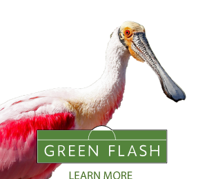 Get environmental news roundup in monthly Green Flash